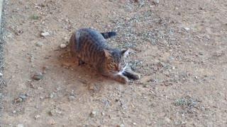 filthy little kitten 2