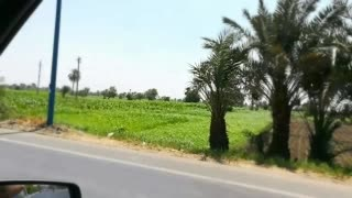 Tourist Records His Trip In Faiyum Green Grass Day