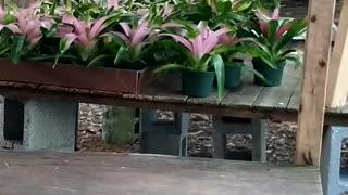 Advanced Bromeliads 3
