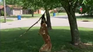 Tree Branch Becomes Toy for Energetic Doggy