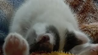 Kitty cleaning himself