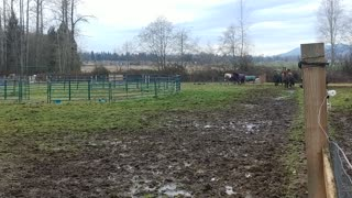 Marysville WA 20 Acre Equestrian-Development Investment Property