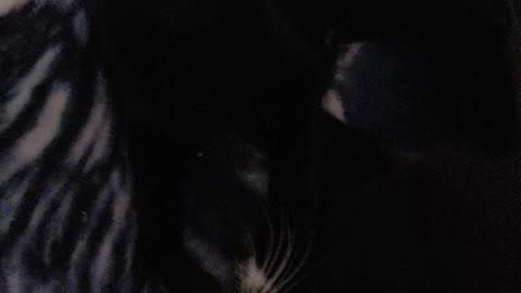 Kitties wrestling 2