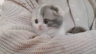 Cute kitten lovely