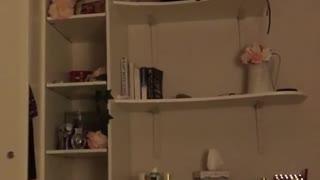 Cat tries to climb down shelves