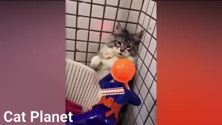 Cat moment funny video
