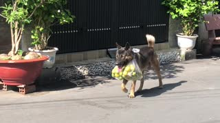 Dog Helps Owner Carry the Groceries