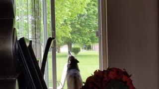 Husky howls along to sound of tornado sirens