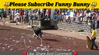 Dangerous Bull Fight Funny Compilation 2021