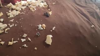 Dog Destroys Chair and Climbs Inside