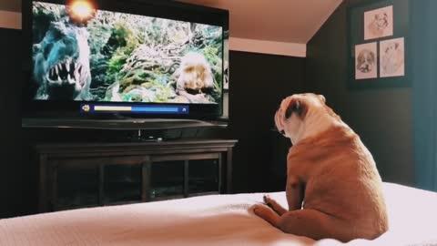 Bulldog Has Incredible Reaction To Actress comic video