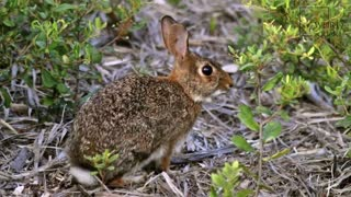 Interesting facts about Rabbit! Bunny day
