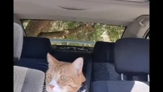 Talking Cats Compilation!!!   Funny & Cute Pets Compilation   Pets Haven