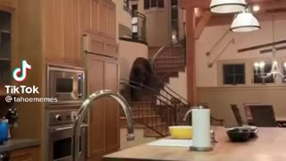 Family Comes Home To Bear INSIDE