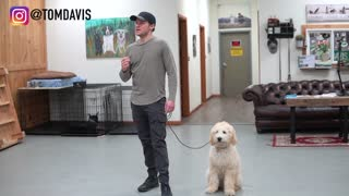 5 MINUTE DOG TRAINING RESULTS You Should Watch