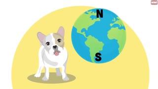 21 Strangest Dog behavior