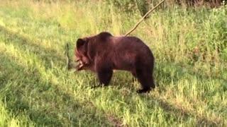 Little bear playing