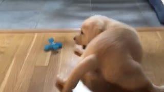 Slip and slide pup