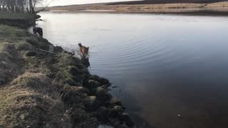 This dog loves to run on water!