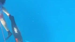 Spearfishing sea shark
