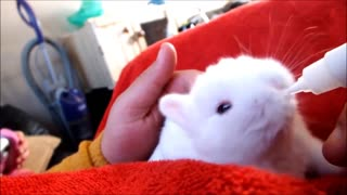 Baby Bunny Rabbits - CUTEST Compilation