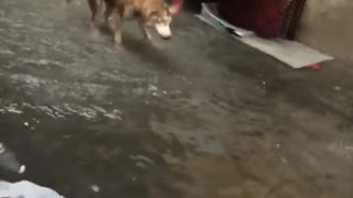the dog thinks he is a fish