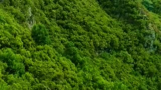Green forest 💚