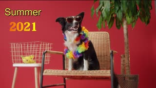 Dog Summer 2021