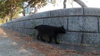 I followed a black cat