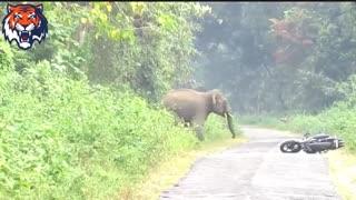 animal attacks human elephants attacks animals attack