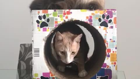 Two cats having fun in the tunnel