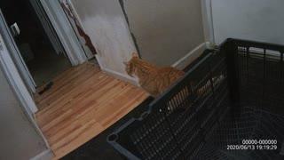 I found hello kitty
