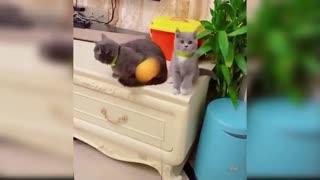 Cat Plays Ball