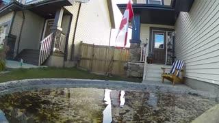 Canada flag bird bath.