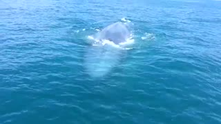 Close encounter with blue whale