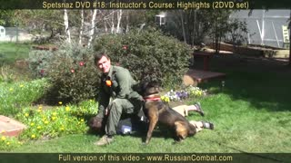 Defend yourself against an attack dog