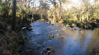 Rapids Trail Hike at Hillsborough River State Park