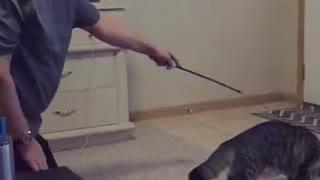 Slomo cat play