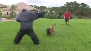 HOW TO MAKE A DOG BECOME AGGRESSIVE IN FEW SIMPLE STEPS