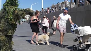 Dog Scared To Death Prank