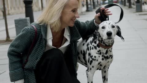 nice dog Dalmatien is a very popular dog,
