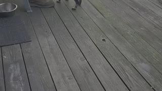 Dog running rapid