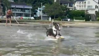Surfing dog!!! 😲🐶😂 part2