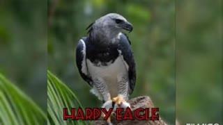 8 most dangerous birds