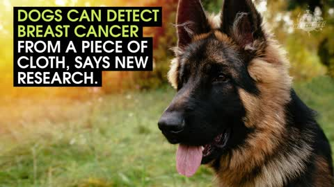 Some Dogs Can Detect Cancer