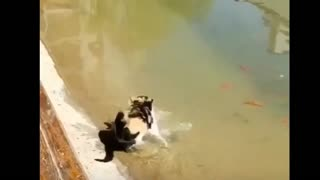 fantastic animals videos