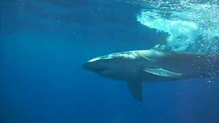 Bigger fish in deeper water - SHARK!