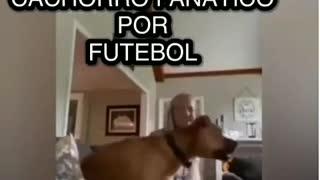 o cachorro fanáticos por futebol