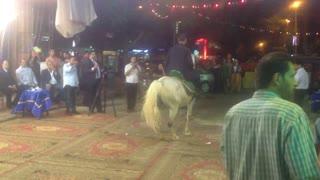 Arabian Horse Dancing in weeding party