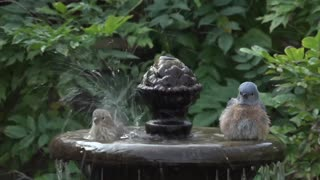 A group of beautiful birds swim in the fountain